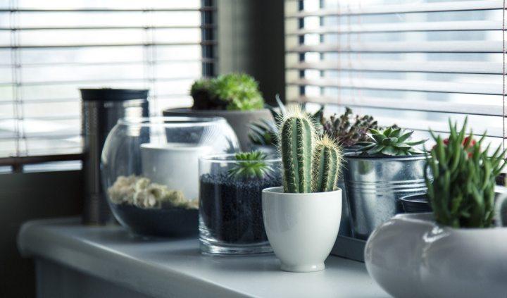 pots-plants-cactus-succulent.jpg